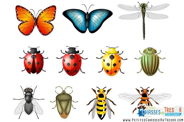 Atelier de découverte des insectes