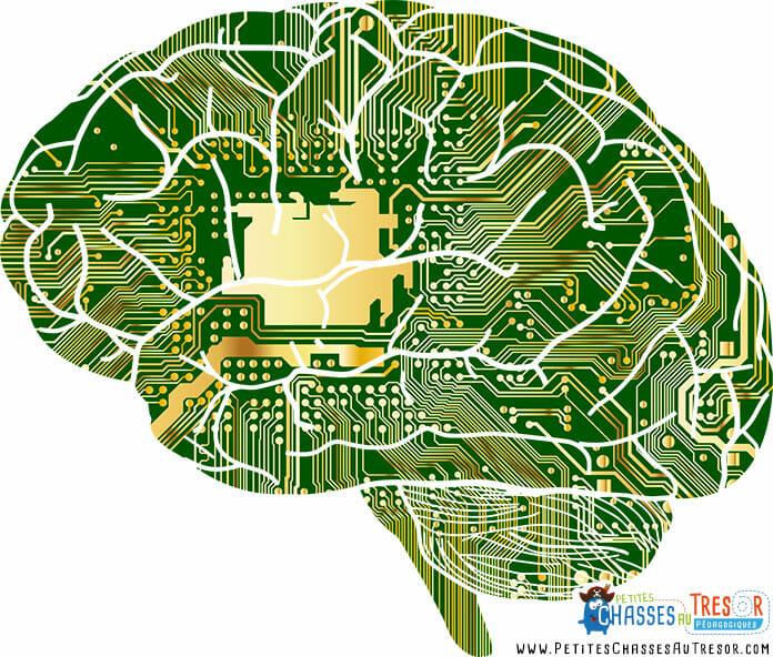 Les cerveaux des enfants à haut potentiel